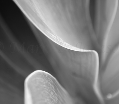 BW Plant Leaves